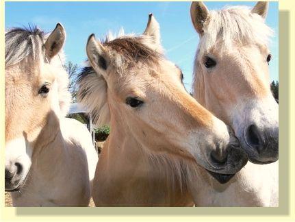 Pferdekommunikation