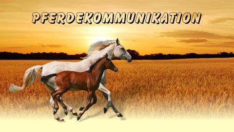 Tier- und Pferdekommunikation